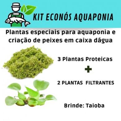 Kit Econós Aquaponia