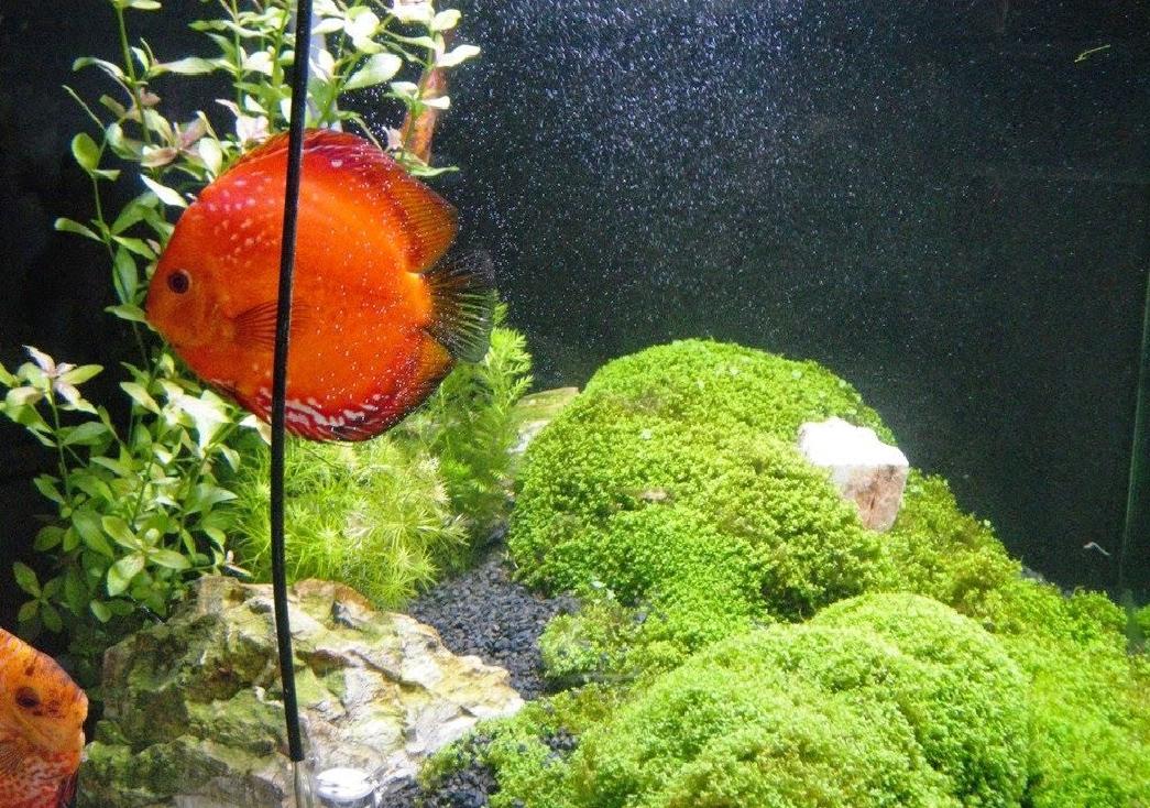 Iluminação adequada para aquário plantado