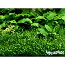 AQUAPAISAGISMO 01: TENHA SEU AQUÁRIO COMO NA FOTO - 100 LITROS